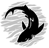 spot_shark_sm