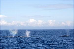 whale_spouts